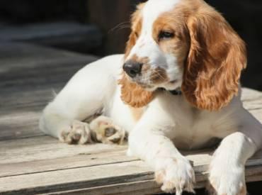 Higijena i ulepšavanje psa – Šta je bitno?