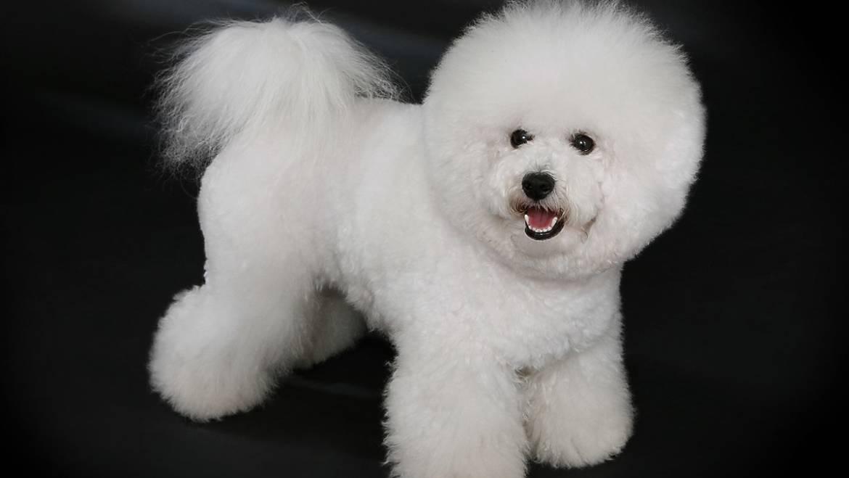 Garantujemo moderne frizure za Vašeg psa