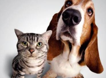 Ko ima bolje čulo mirisa mačka ili pas i zašto?