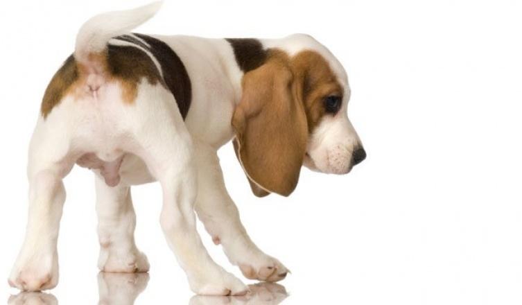 Kako se ponašati kada štenci stižu?
