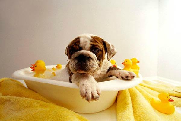 Kako održavati higijenu pasa kod kuće?
