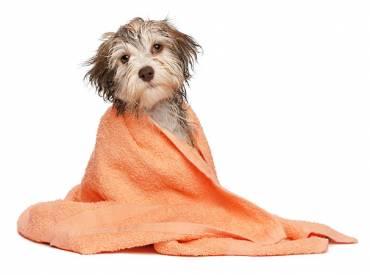 Sve o kupanju pasa!