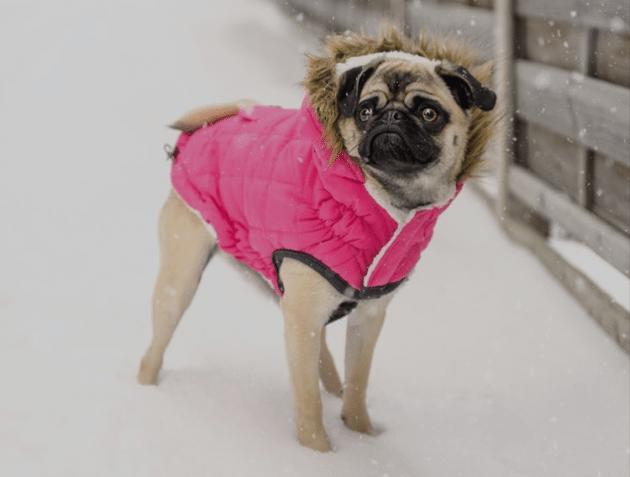 Odeća za pse, potreba ili moda?
