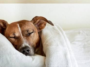 Spavanje sa psom!