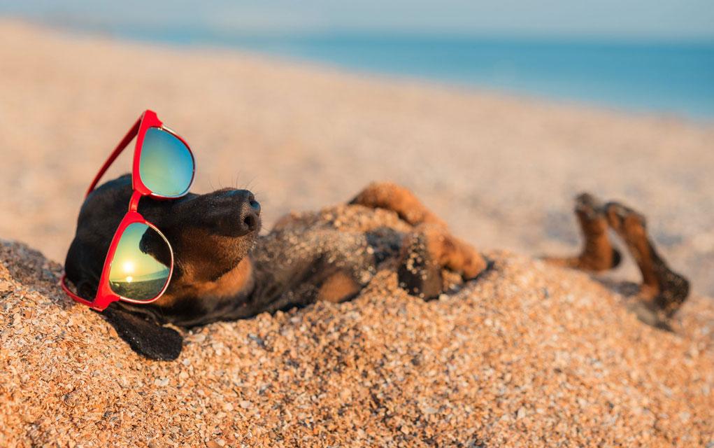Pravila ponašanja na plaži sa psima!