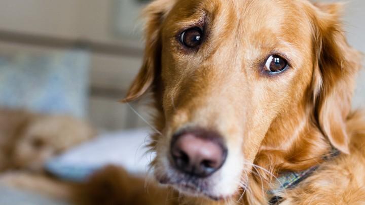 Zašto se pas trese kad uđe u salon za šišanje pasa?