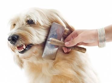 Kako pravilno češljati psa?